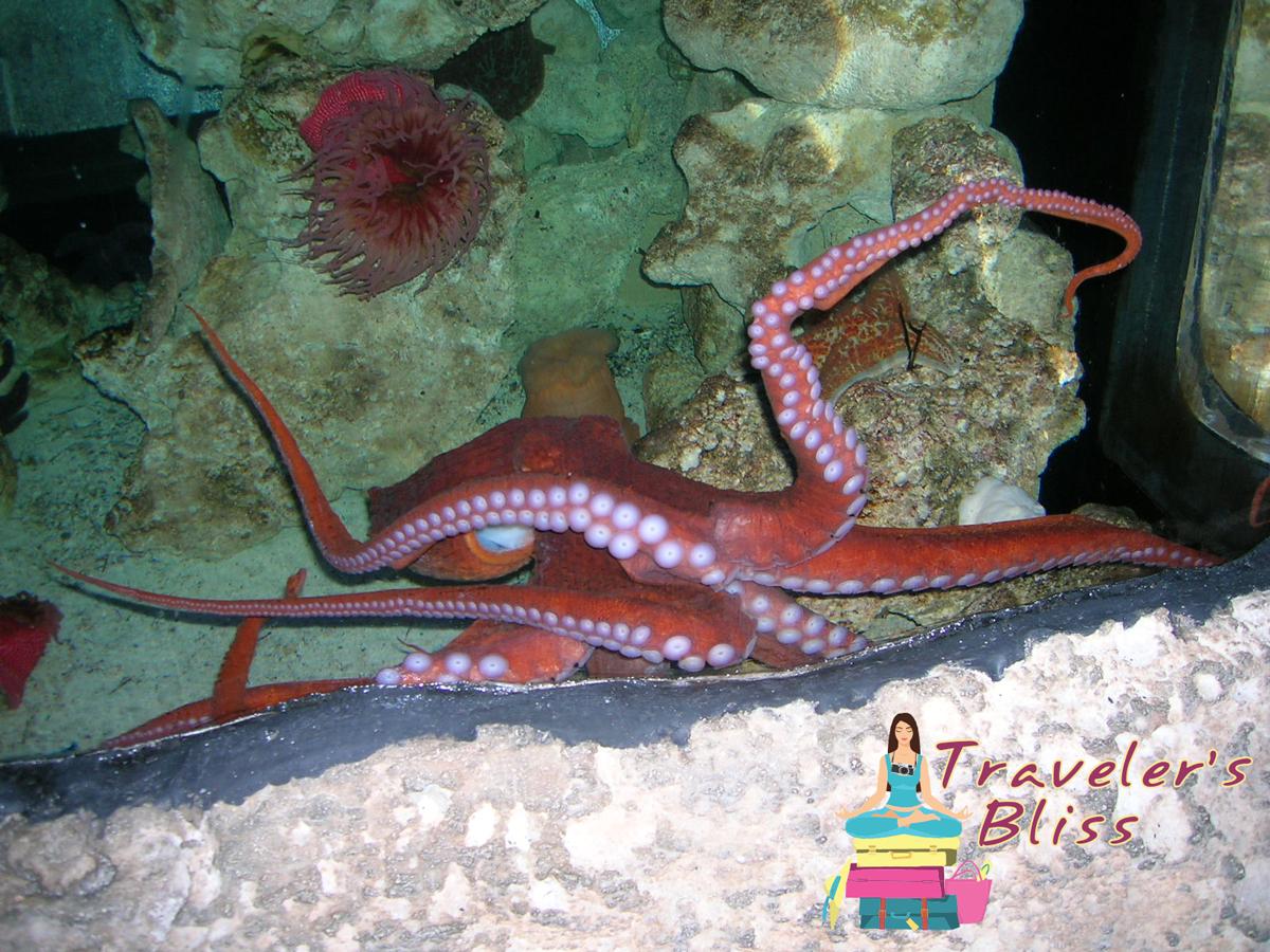 Atlantis Vacation Resort in the Bahamas Indoor Marine Habitat