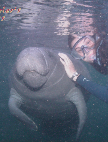 Swim with Manatees in Crystal River Florida