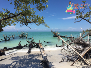 Beer Can Island Longboat Key